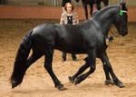 STOCK - 2014 Andalusian Nationals-218