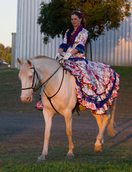STOCK - 2014 Andalusian Nationals-268