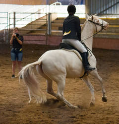 STOCK - 2014 Andalusian Nationals-246 by fillyrox
