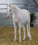 STOCK - 2014 Arabian Gala-349