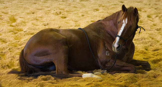 STOCK - 2014 Total Equine Expo-38