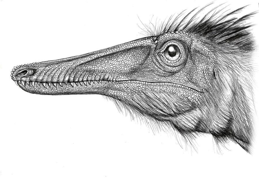 Austroraptor by MALvit