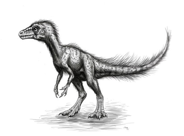 Sciurumimus albersdoerferi