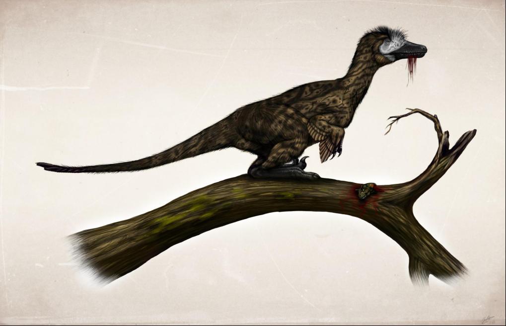 http://fc05.deviantart.net/fs71/f/2013/043/3/4/austroraptor_camouflage_by_malvit-d5up2dm.jpg