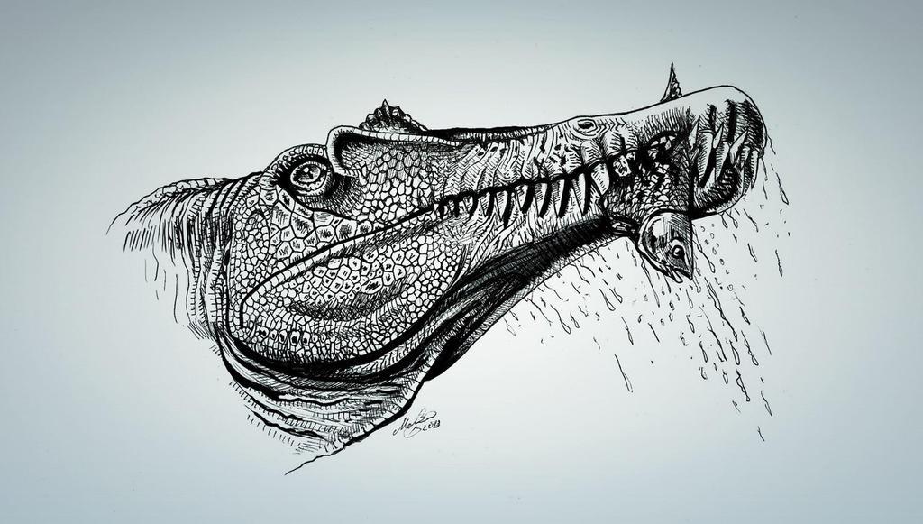 http://fc06.deviantart.net/fs70/i/2013/257/b/8/spinosaurus_by_malvit-d6mau11.jpg