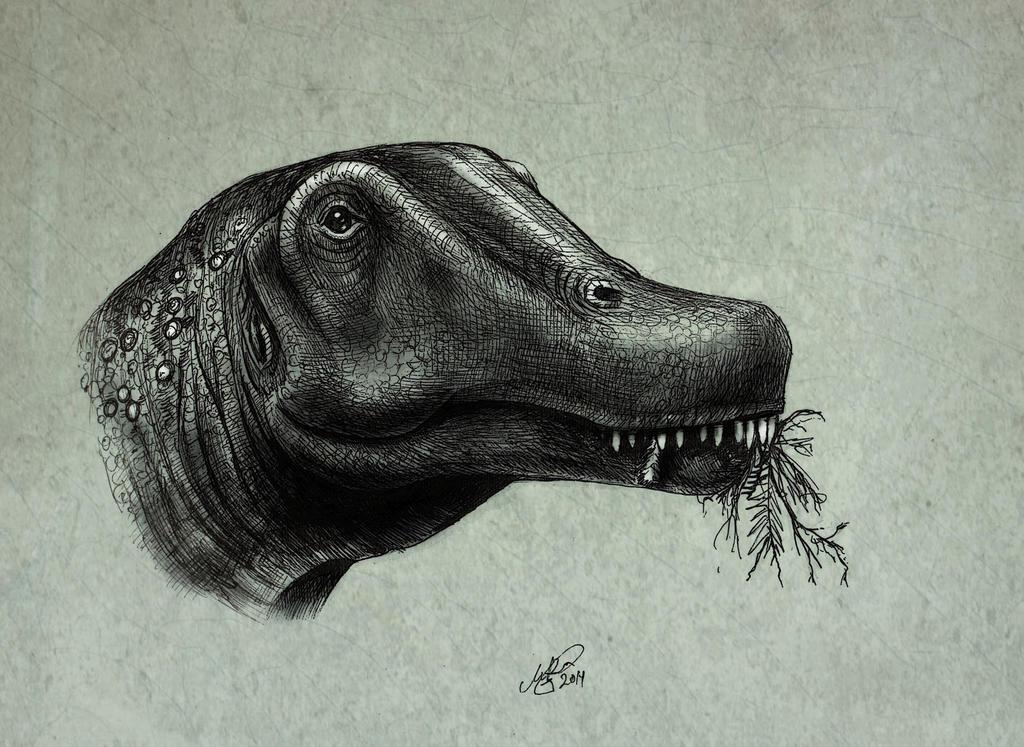 Dreadnoughtus schrani by MALvit