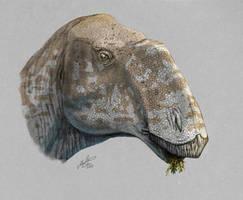 Rhinorex by MALvit