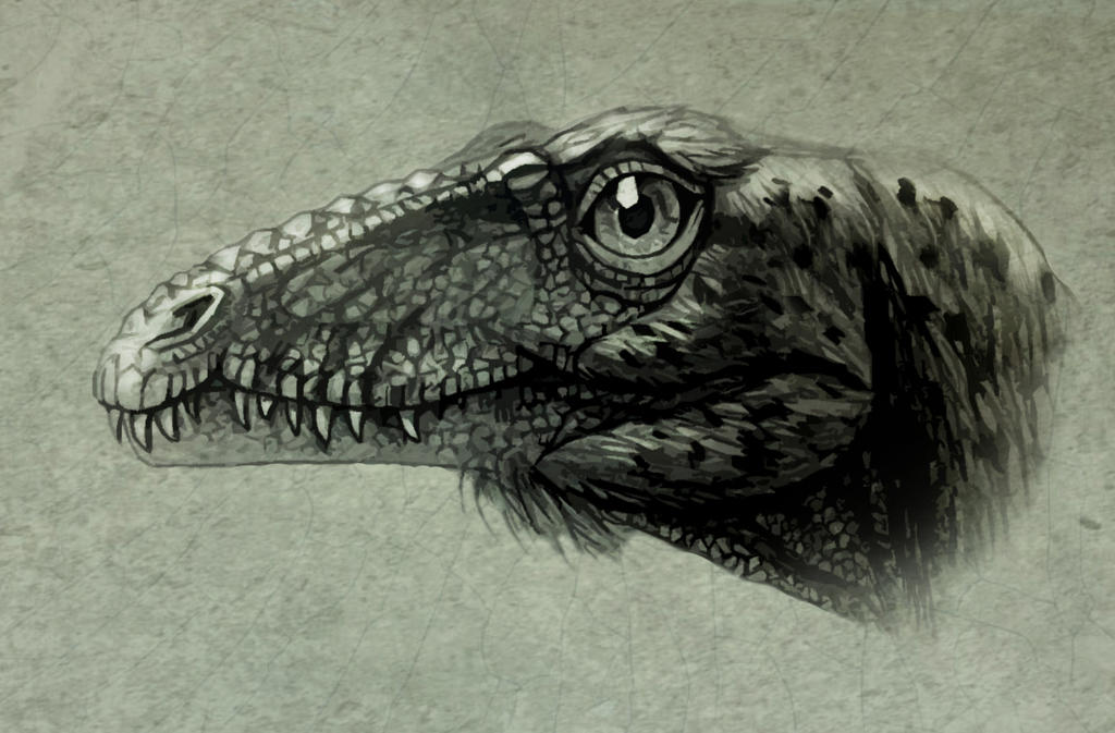 Tachiraptor admirabilis by MALvit