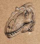 Allosaurus jimmadseni portrait