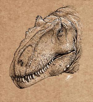 Allosaurus jimmadseni portrait