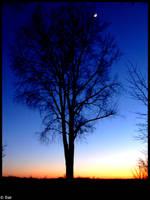 Dark tree by ruudjunk