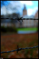 Barbed wire by ruudjunk