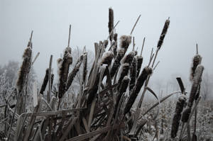 Winter 04 by ruudjunk