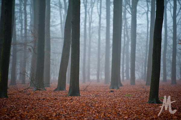 Misty forest by demonhunter