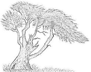 tree by Alimech