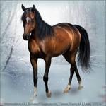 Horse Avatar ~ Chilam