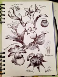 Genshin Impact Flowers/Specialties (Mondstadt)
