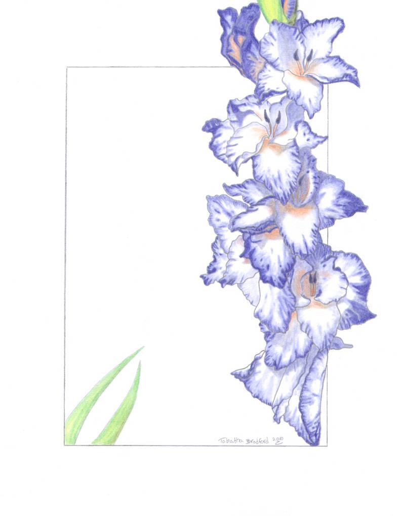 Purple and Orange Gladiolus