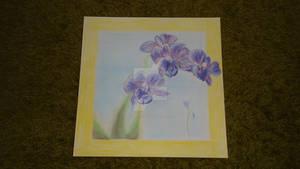 Orchids - Soft Pastel