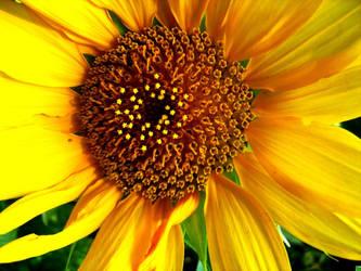 Floarea Soarelui by MAGDAMMUS