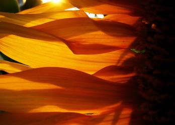 Sunflower by MAGDAMMUS
