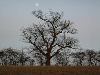 Winter tree and moon by alloymental
