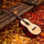 Tones of the autumn