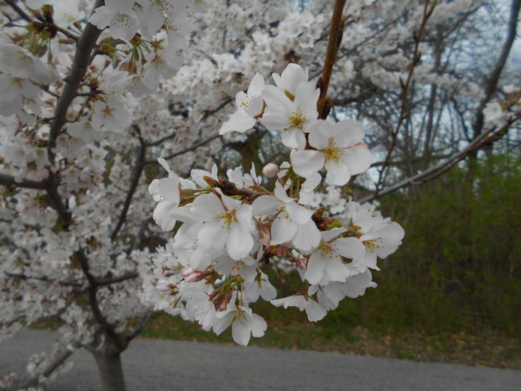 Spring by Jieikobu