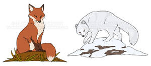 Red Fox and Arctic Fox