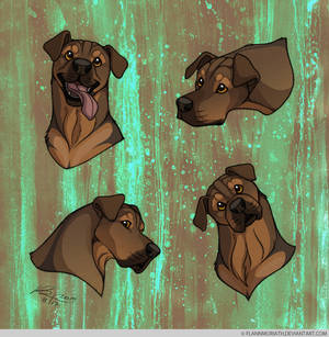 Headshot Expressions: Bilbo