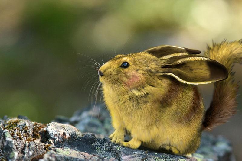 realistic pikachu by brianpaulray on deviantart