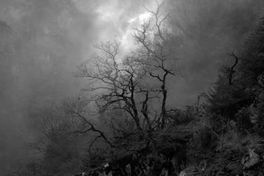 Fog Lifting by organicvision