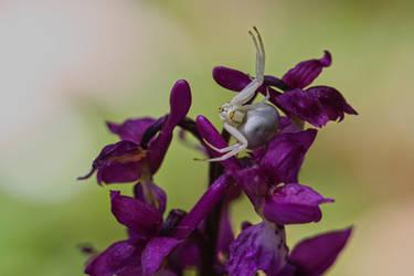 Pollinators Beware by organicvision