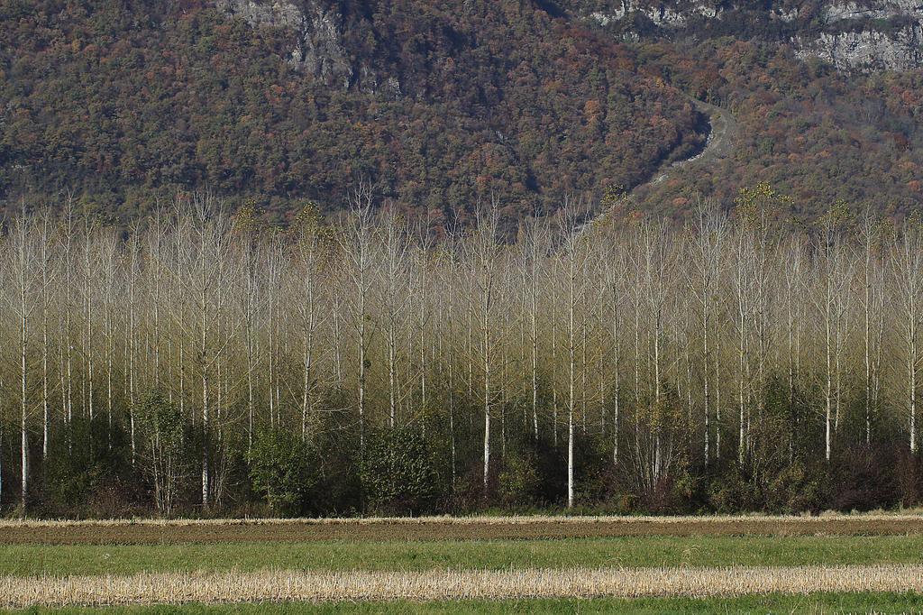Poplar Grove by organicvision