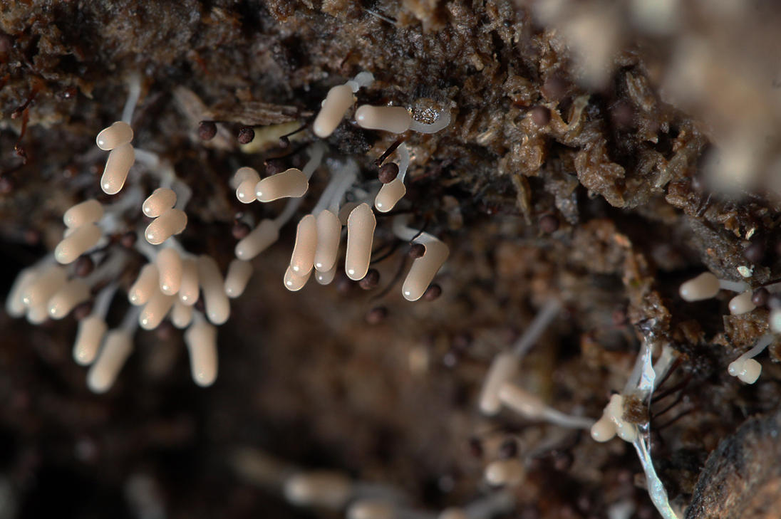 Mixed Myxomycetes by organicvision