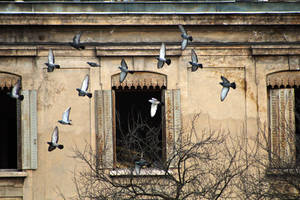Pigeon Coup by organicvision