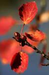 Poplar in the Park