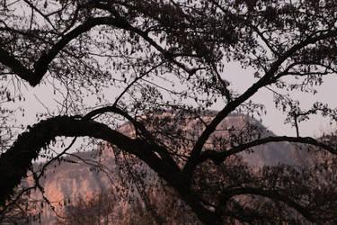 Alder Hills by organicvision