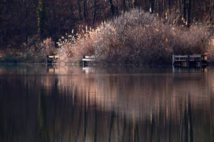 Reeds in the Willows by organicvision