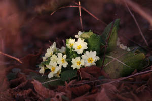 First Signs of Spring by organicvision
