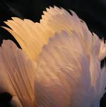 Fallen Angel by organicvision