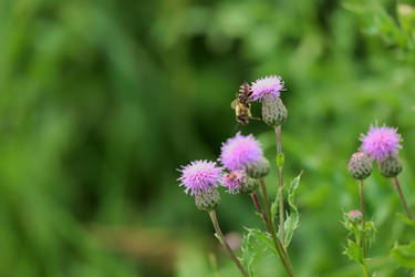 One Thistle to Another by organicvision