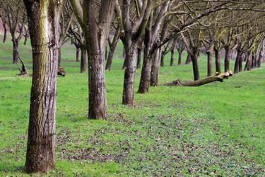 Wallnut Grove