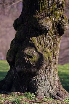 Portrait of an Oak