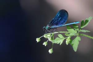 Metalic Blue