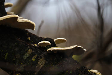 Fungus over the Lake