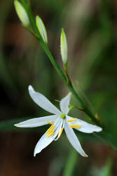 Local Lily