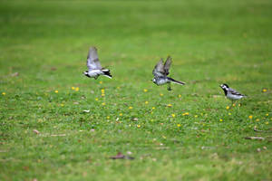 Fluttering Away
