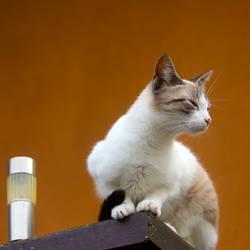 Cat in a Square