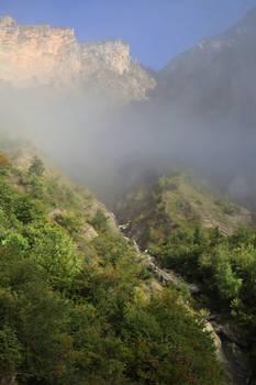 Chartreuse Fog